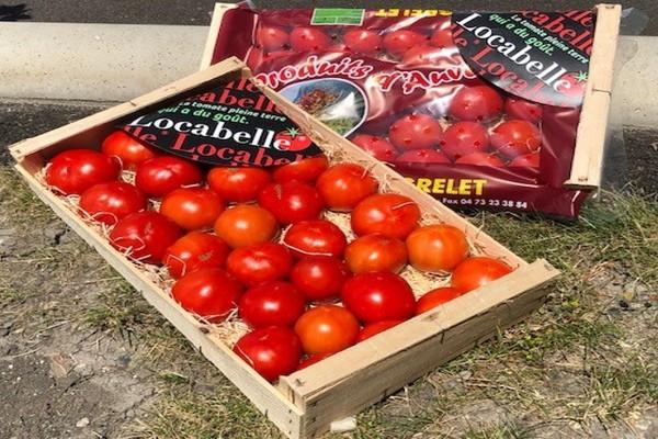 Tomates Locabelle